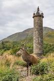 Red-deer-glenfinnan-monument