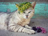 Midsummer kitty with flowers