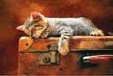 Kitty On A Case