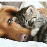 love-dog+kitten