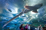 Underwater World Pattaya-An aquarium at Pattaya which wasn…-Flic