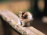 Cute-animal-pics-part38-6