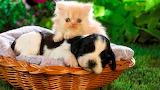 Amigos de cuatro patas