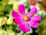 Flor abeja3