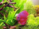 #Tropical Fish Aquarium