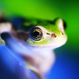*Little Green Frog...