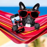 Selfie Puppy...
