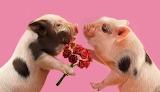 #Piggy Love