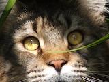Cat-in-garden-