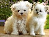 Cute-baby-kittens-pets