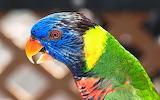 ^ Colorful Parrot