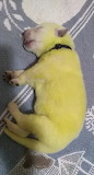 Dog Gives Birth To A Lime Green Puppy Named 'Hulk'