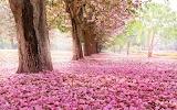 Pink-blooms-ground
