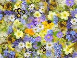 Spring-flowers-