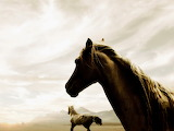 Black-horse-pictures