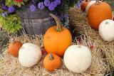Pumpkins, straw, flowers, autumn, harvest