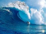 HorseWaves-surfG