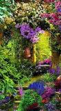 Beautiful Colorful Garden