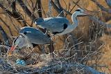 Baikal nature reserve. Heron's nest