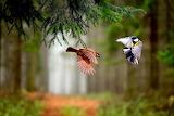 Birds filying in forest