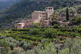 Oliveraie, Soller Mallorca (Loul)