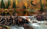 Beaver dam in Canada