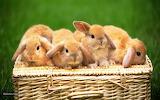 Cute-animals-photos