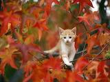 Autumn tree and kitten