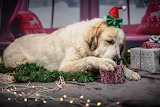 Dog-gifts-decorations-Christmas