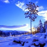 WINTER SUNLIGHT...