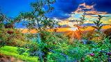 Sunset over apple field