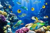 Underwater-coral-ocean-reef-fish-tropical