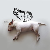 Funny Bull Terrier Wings