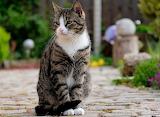 Nice kitty
