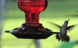 Humming bird speed eating