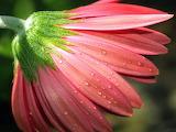 Flor closeup2