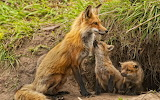 Mother and babes.......................................x