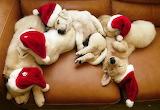 puppies-christmas