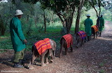 Ivory Orphans, Kenya