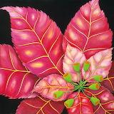 ☺ Poinsettia...