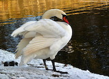 nad zimowym stawem w Parku Oliwskim-foto-Patrycja Walczak