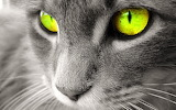 #Look Deeply Into My Eyes...