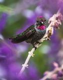Purple Nature