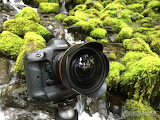 Jason Savage Photography-Canon Camera In Nature