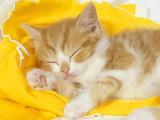 Cute-cats-wallpaper-7