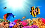 Peixos - Fish