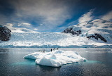 Crossing the Circle Southern Expedition PInguine Scholle