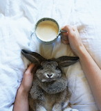 bunny and beverage