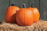 healthy food-pumpkin