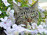 Green-eyed kitty among flowers